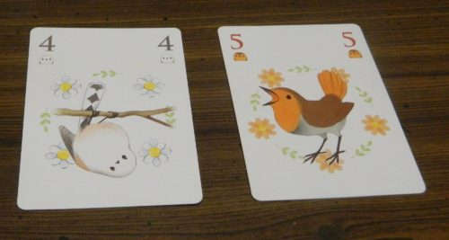 Playing A Card in Songbirds