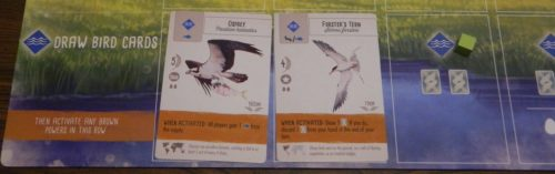 Draw Bird Cards in Wingspan