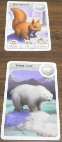Contemplate Second Card in Cardline Animals
