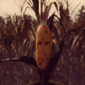 Maize Screenshot